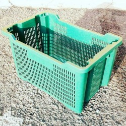 Cassetta raccolta olive verde
